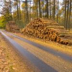 """Proiectul """"DNA-ul Pădurilor a fost adoptat de Camera Deputaților"""