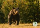 Românii indignați de uciderea ursului brun reacționează: Au luat cu asalt pagina de Google a castelului deținut de prințul Emanuel von und zu Liechtenstein